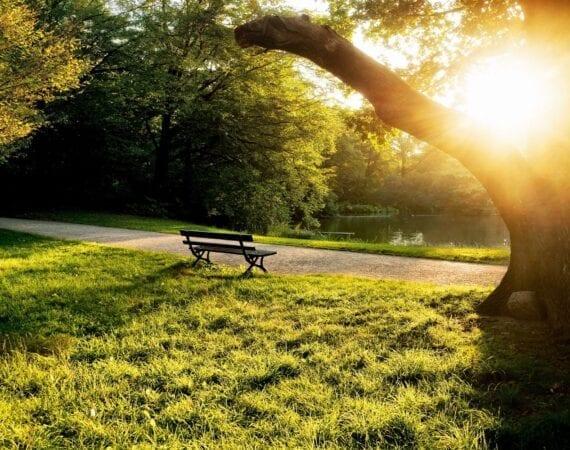 7025796-city-park-bench-sunset